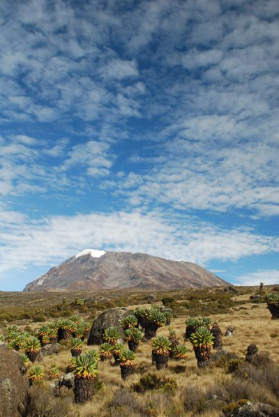 Background Information on Kilimanjaro
