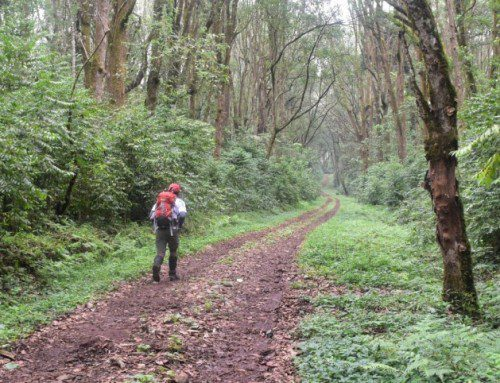 Solo travellers on Kilimanjaro: some advice and tips